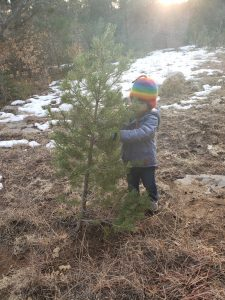 a toddler with the smallest christmas tree